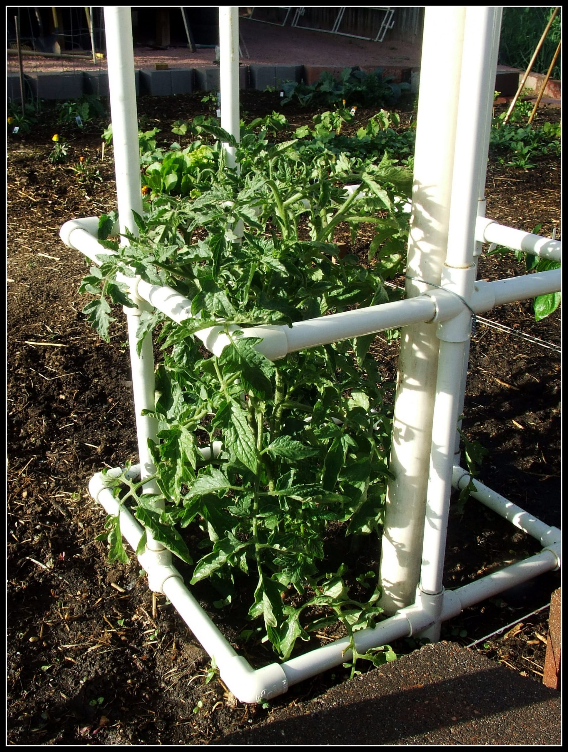 7.Simphome.com PVC Pipe Tomato Cage 2