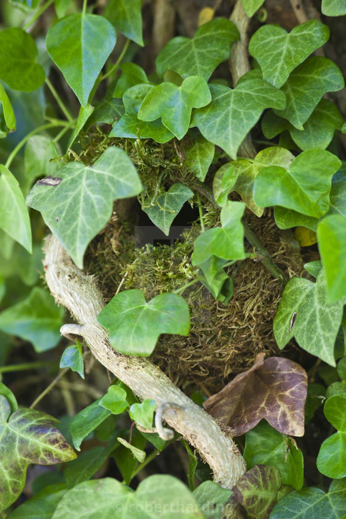 9.Simphome.com Make an Ivy Covered Fence 1