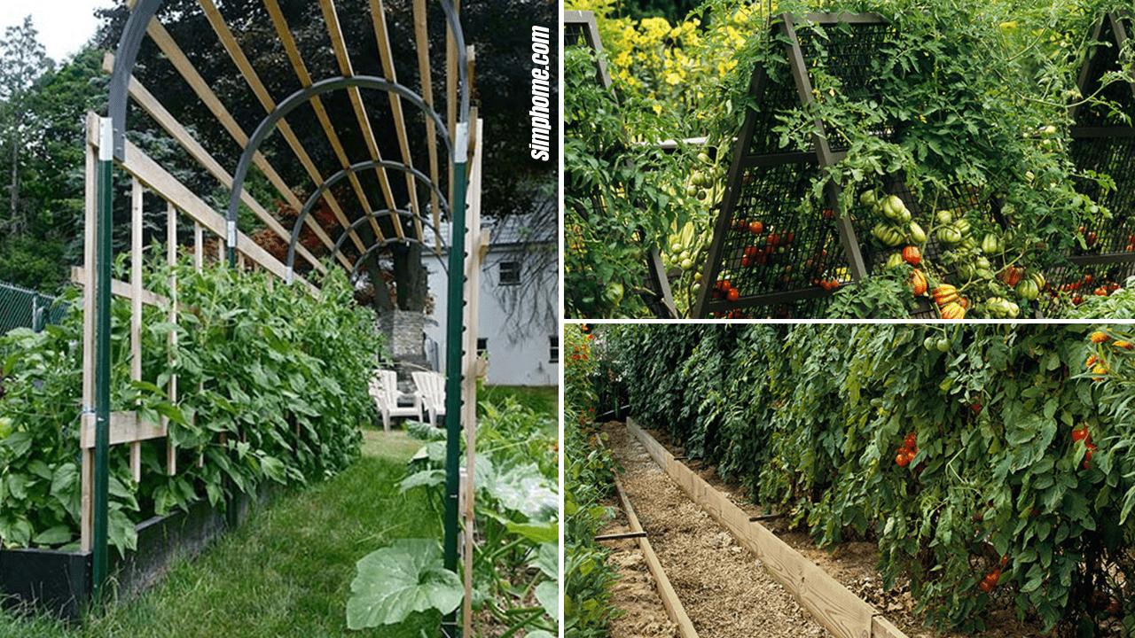 Simphome.com 10 Tomato Garden Ideas Featurd Image