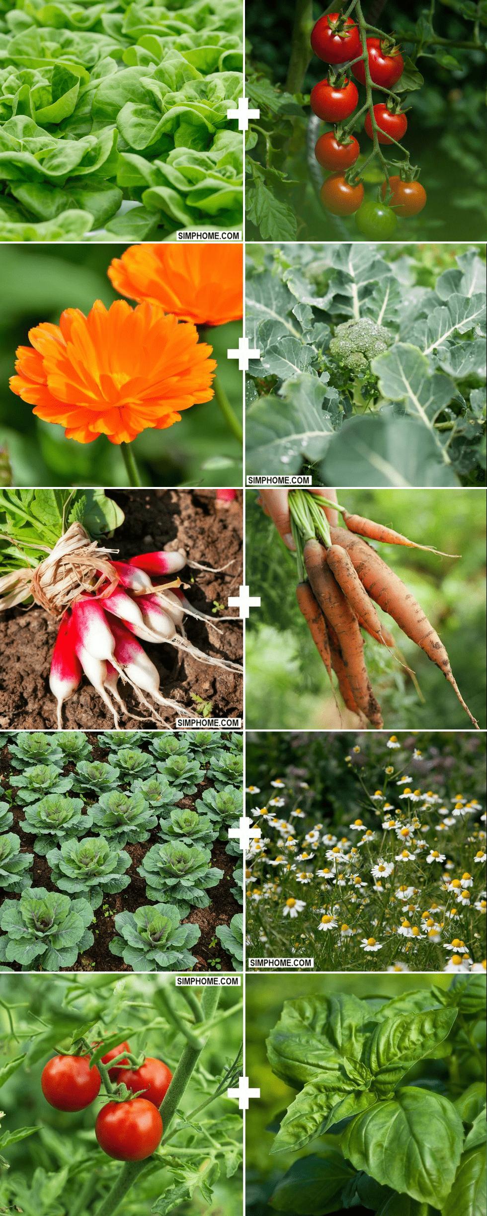 Simphome.com .7.Pallet Vegetable Garden Plan