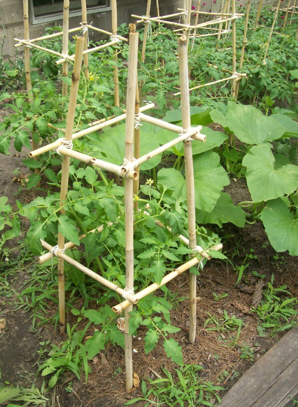 homemade bamboo tomato cages cost 0 tomato with regard to 10 ideas for garden tomatoes most stylish and stunning