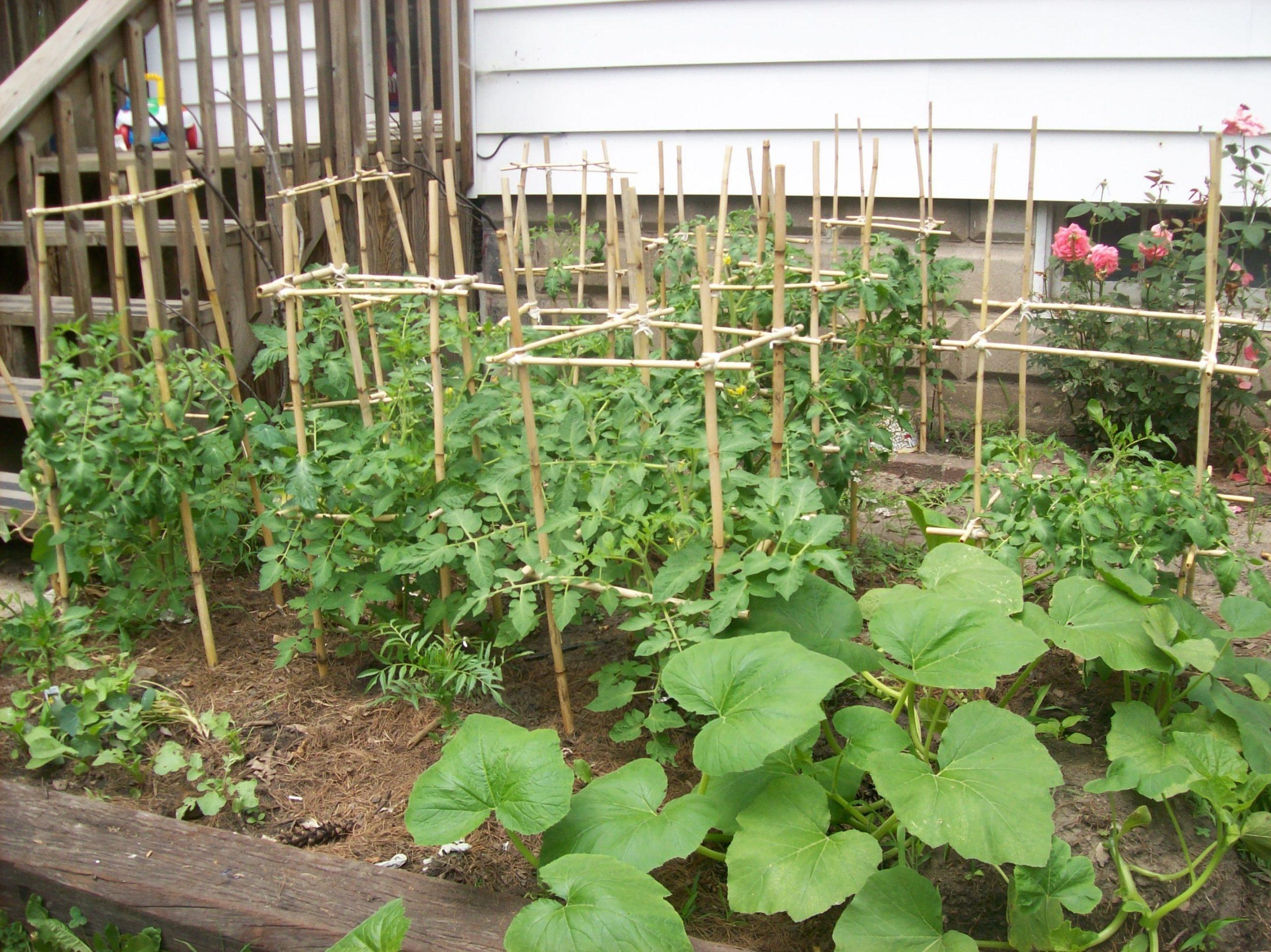 how to build tomato cages ideas stopqatarnow design regarding tomato garden ideas
