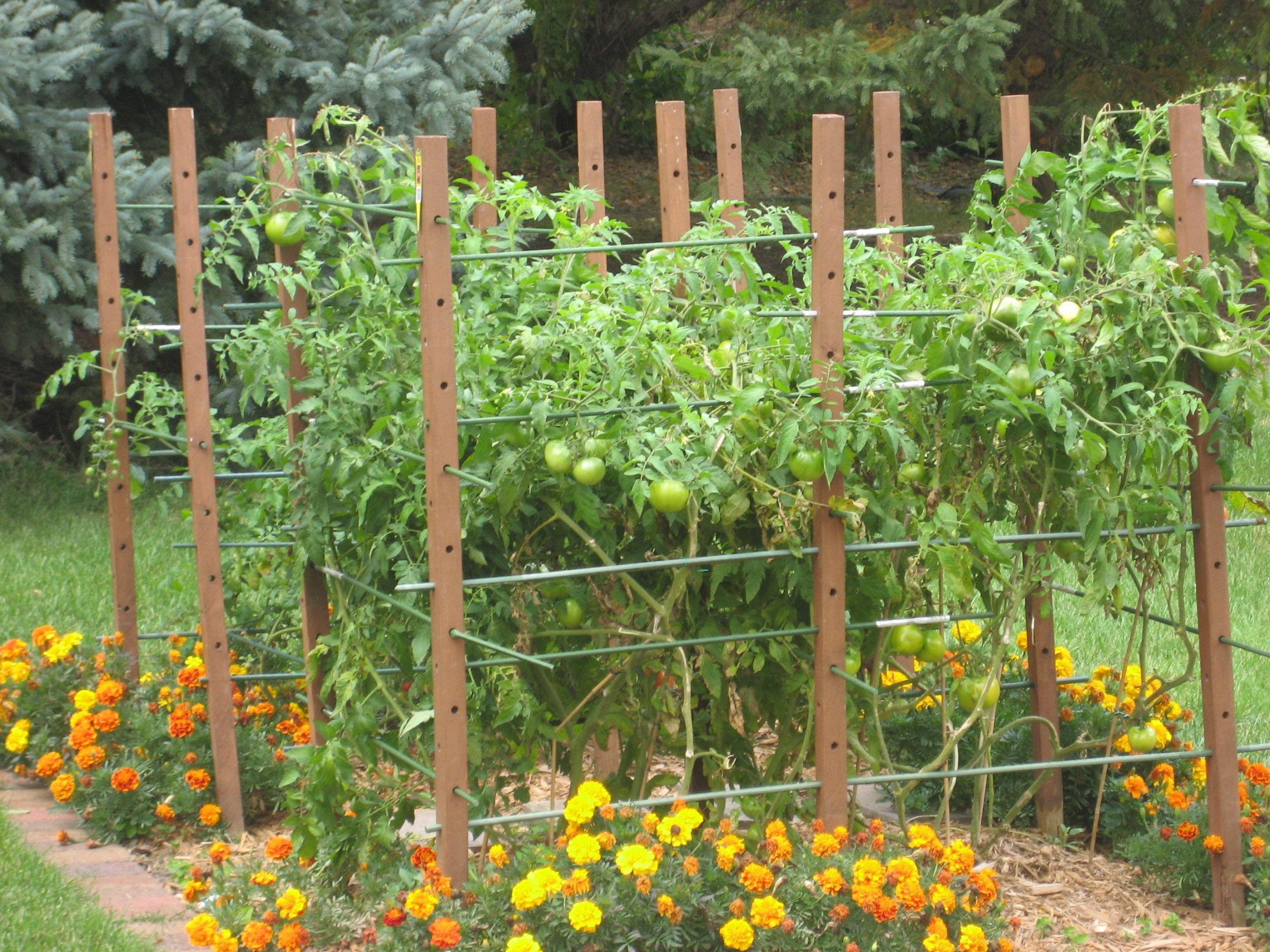 tomato trellis idea growing tomatoes problems garden growing within 10 tomato garden ideas most brilliant as well as beautiful