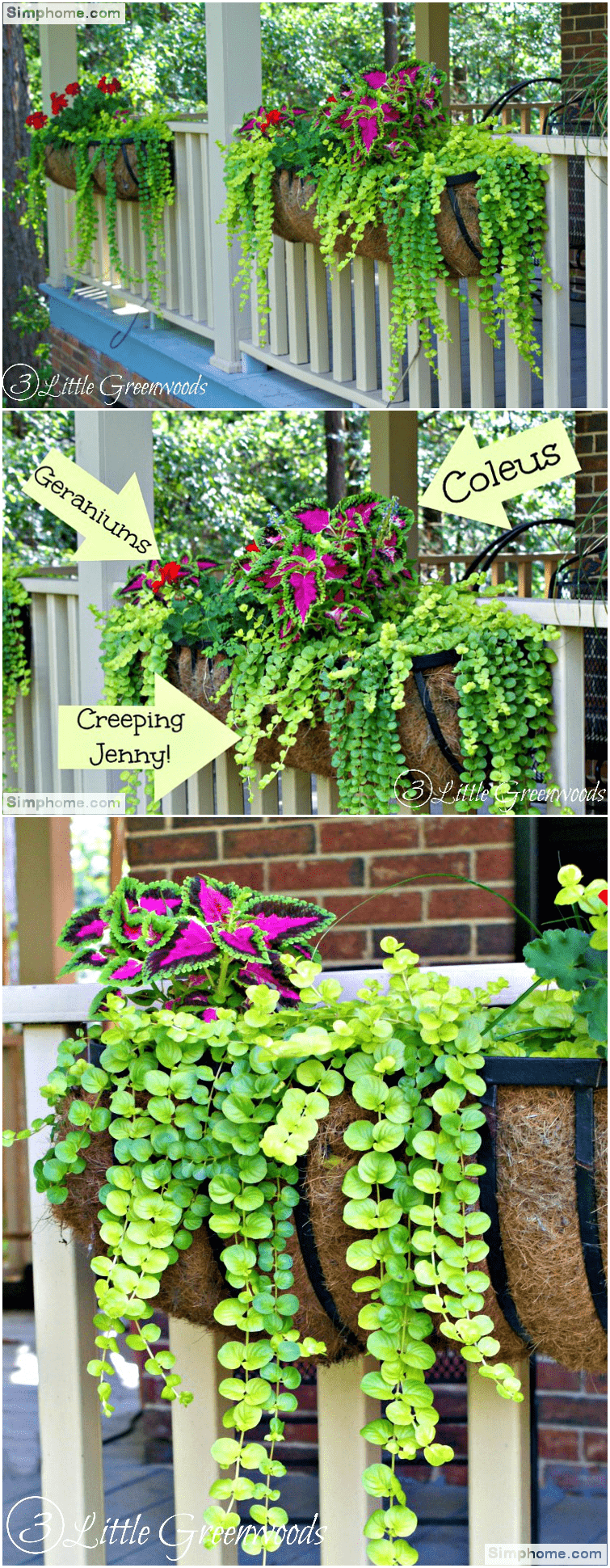 1.Give a Lively Lift with Plants via Simphome.com