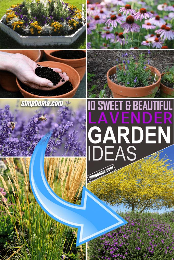 10 Lavender Garden Project Ideas by Simphome.com