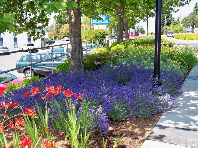 2. Lavender Under the Tree by Simphome.com 1