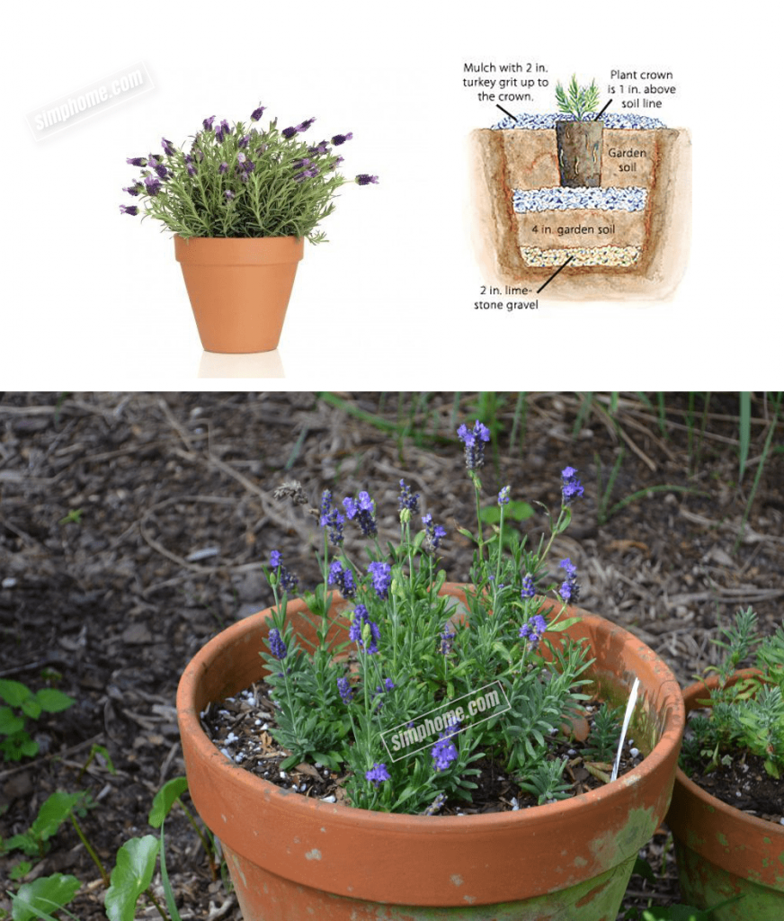 7. Lavender in Containers by Simphome.com