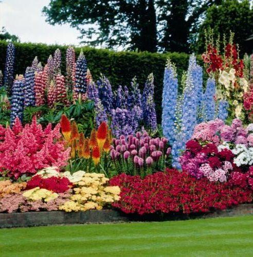 8.Colorful Lavander Garden Project by Simphome.com 2