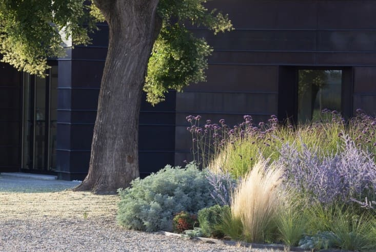 9. Lavender in Modern Landscaping by Simphome.com 2