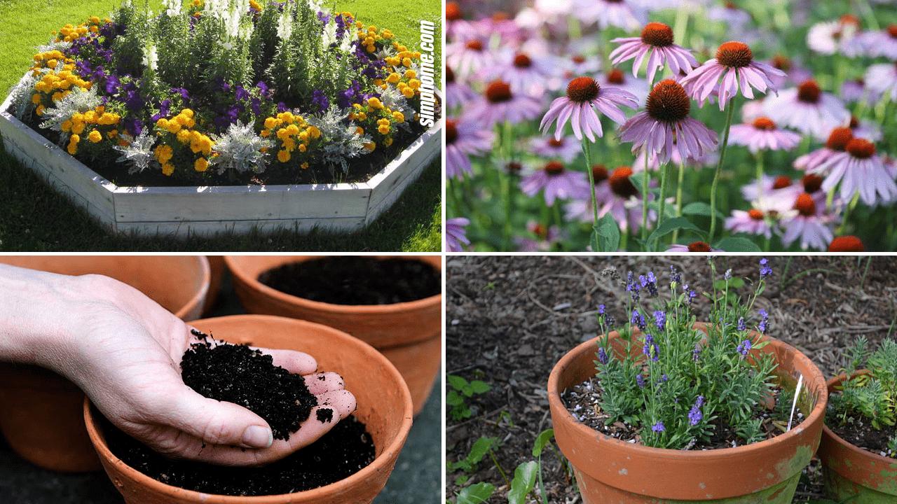 Lavernder Garden Plant idea via Simphome.com