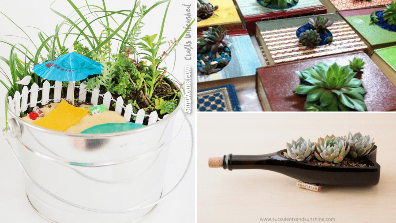 10 Indoor Succulent Garden Ideas via Simphome.com Thumbnail