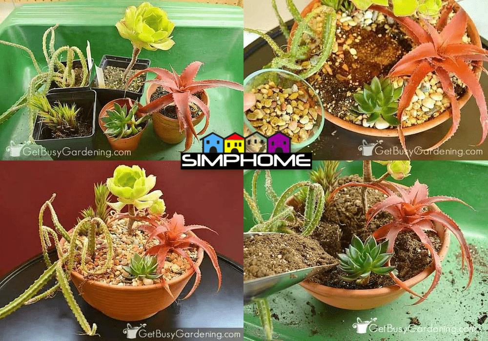 10.How to Make Indoor Succulent in a Pot via Simphome.com