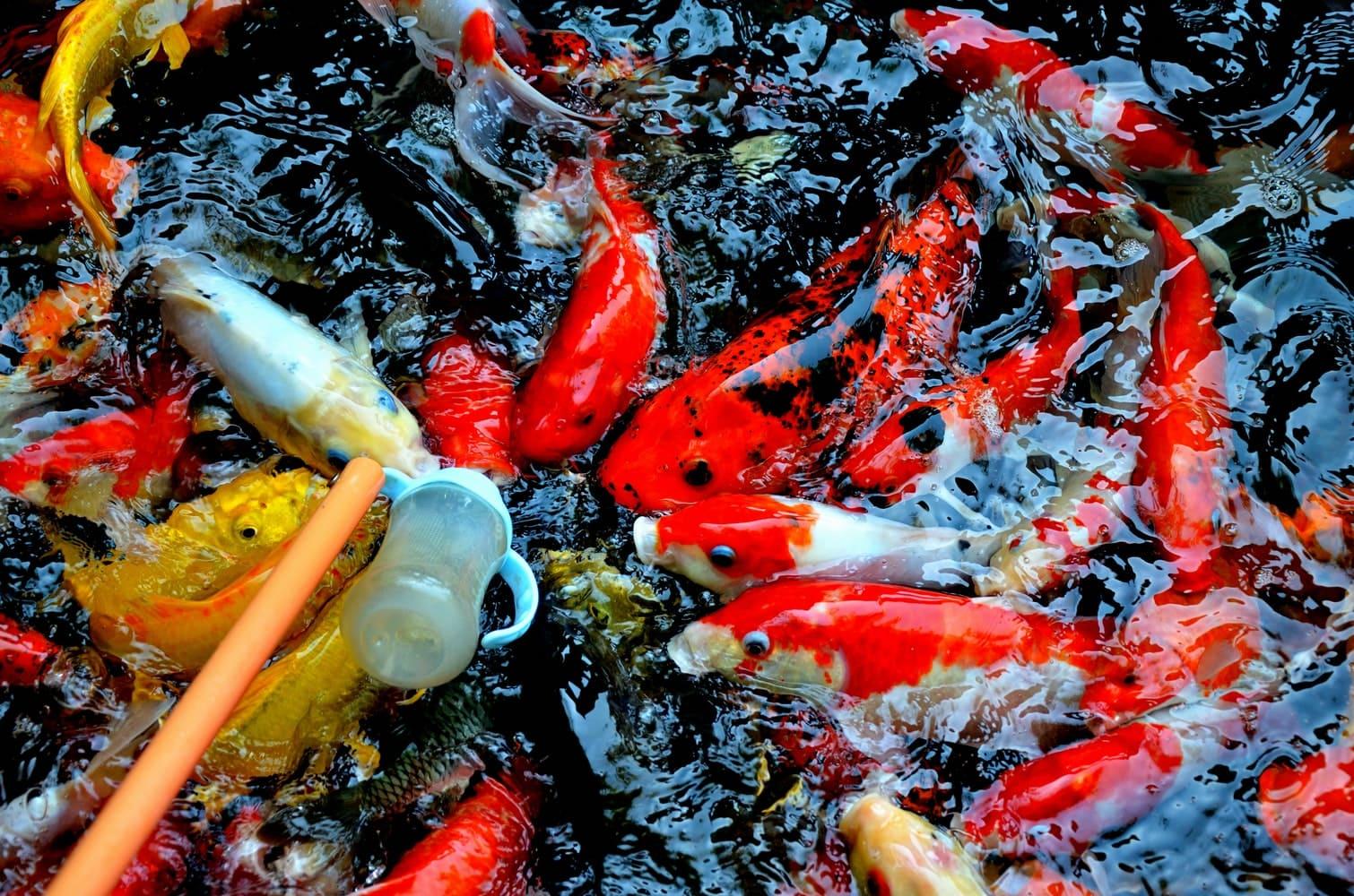2.Let the Fish Swim via Simphome.com