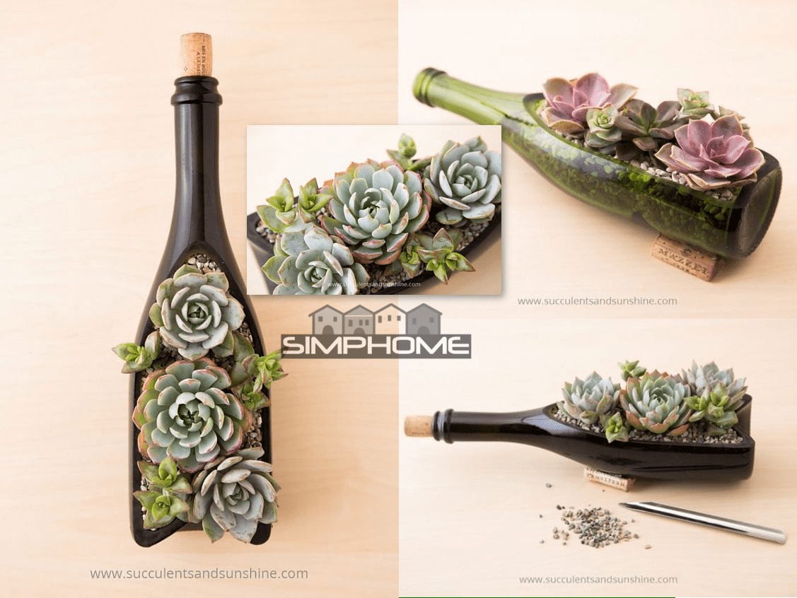2.Succulent Wine Bottle Project Idea via Simphome.com