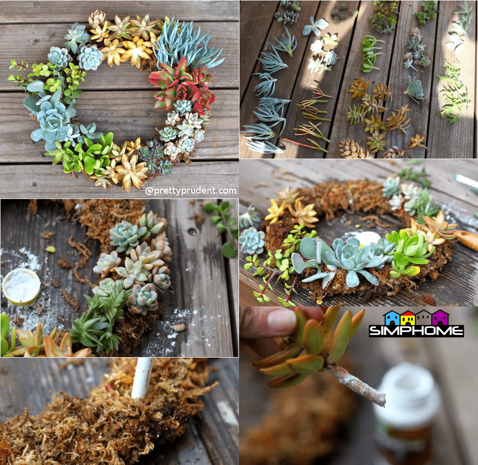 3.Succulent Wreath via Simphome.com