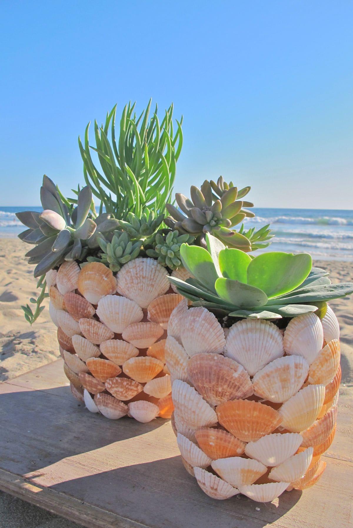4.Succulent Project in Shell via Simphome.com