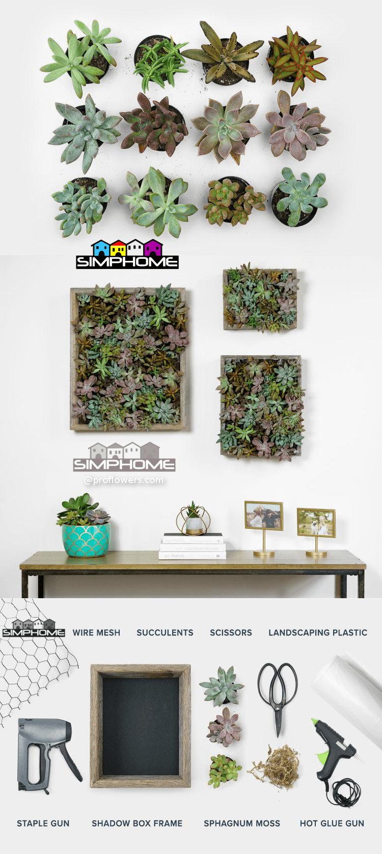5.Succulent Wall Garden via Simphome.com
