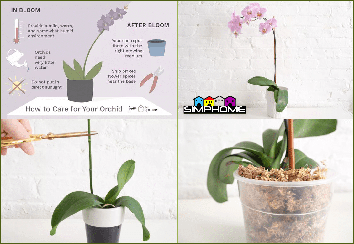 8.Hanging Orchid and Succulent on the Floor via Simphome.com