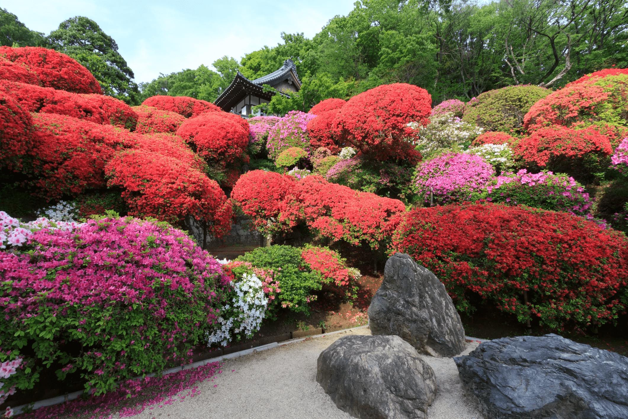 8.Plants for a Japanese Garden via Simphome.com