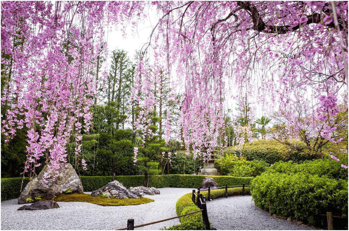 8.Plants for a Japanese Sakura Garden via Simphome.com
