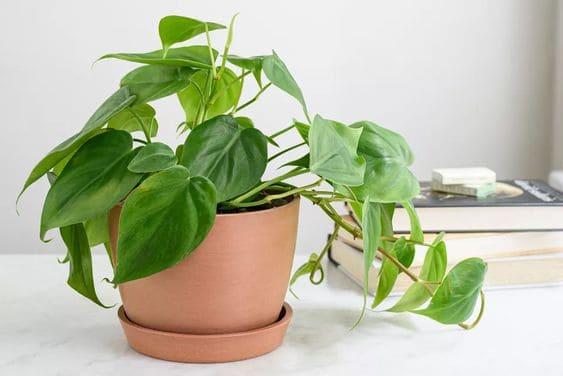 9.Plant for Indoor Garden for a Low Light Room via Simphome.com