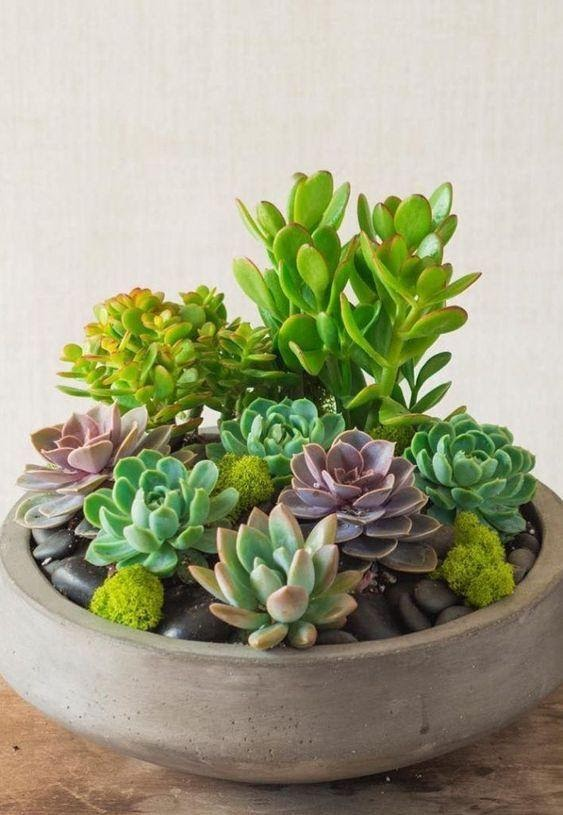 1. Succulent by simphome.com