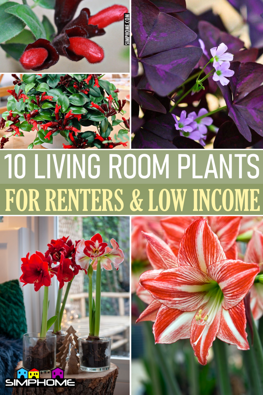 10 Living Room Plants Recommended for Renters and Low Income House Owner via Simphome.comFeatured