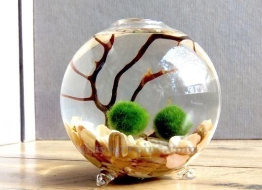 4. Marimo Moss Ball by simphome.com