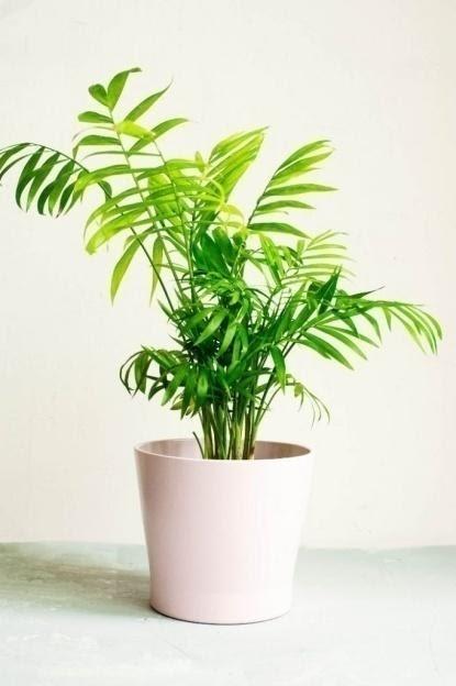 5. Parlor Palm by simphome.com