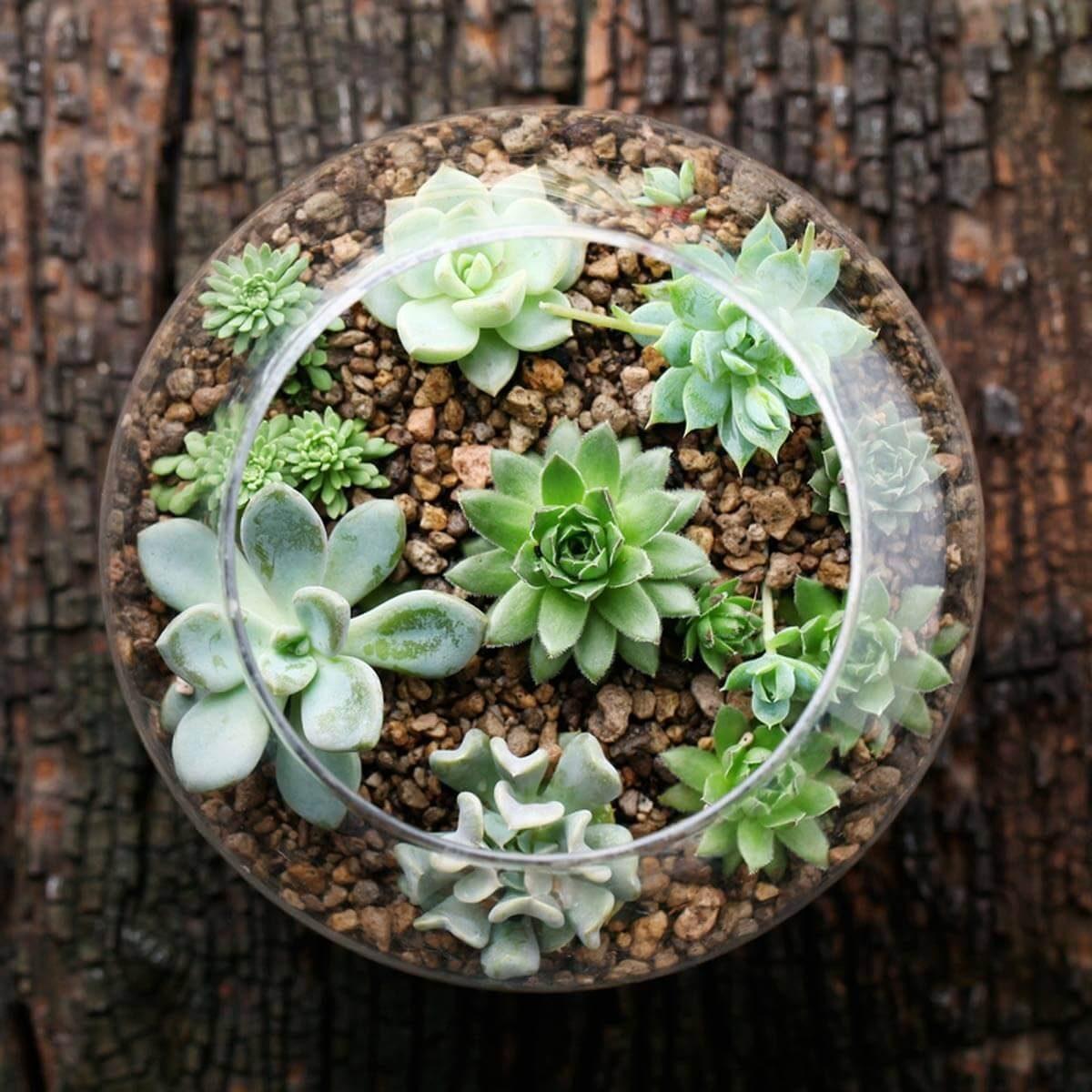10. Fabulous Terrarium by simphome.com